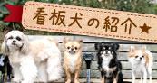 ALCUORE看板犬の紹介
