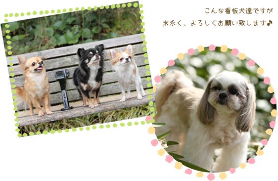 看板犬の紹介イメージ画像