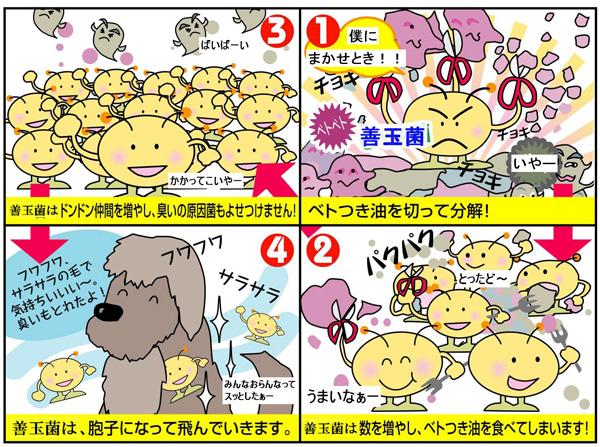 OYK菌の特徴 4コママンガ
