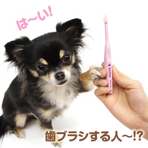 歯ブラシする人〜!?